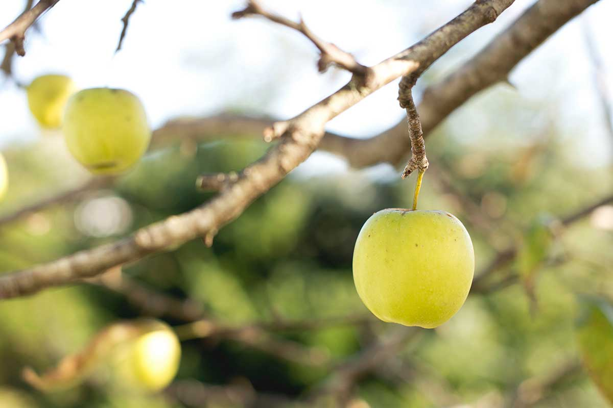 DIY Vinegar Wash For Fruits & Vegetables