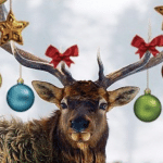 Distinctly Montana Gifts Clothing Holiday