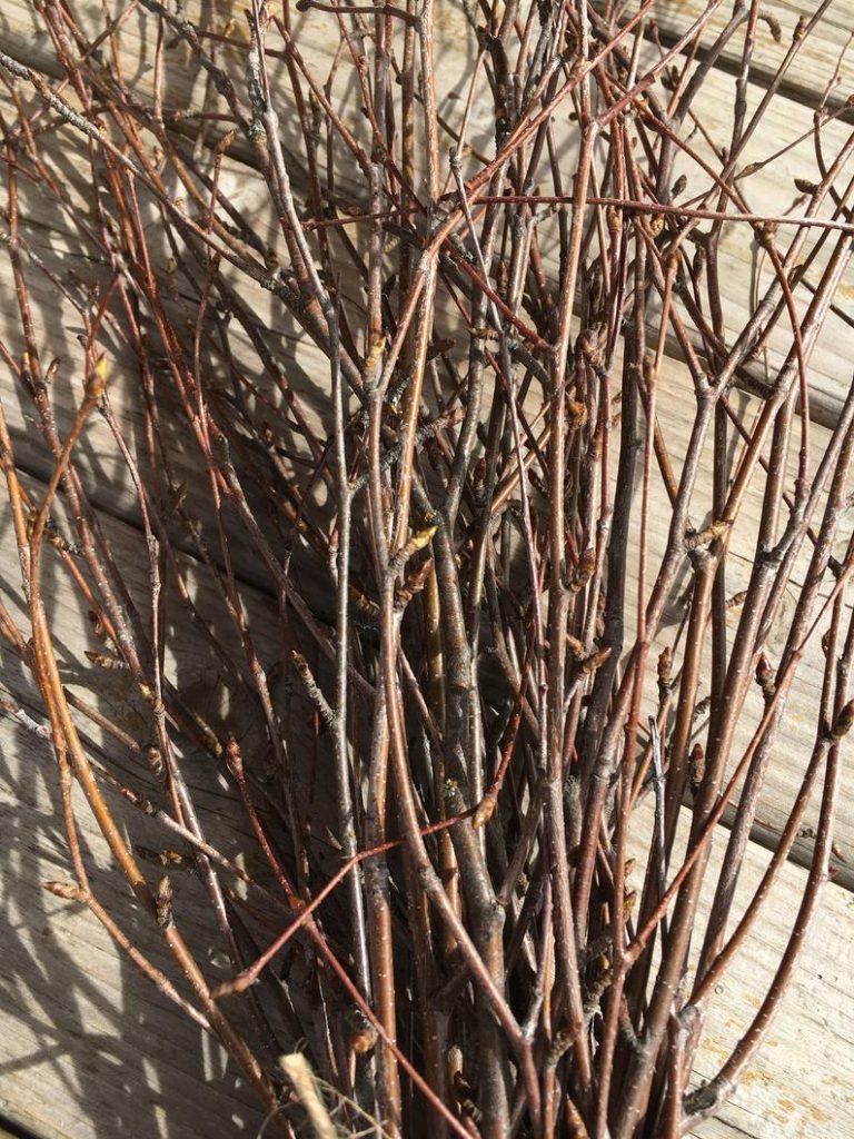 birch tree branches floral arrangement